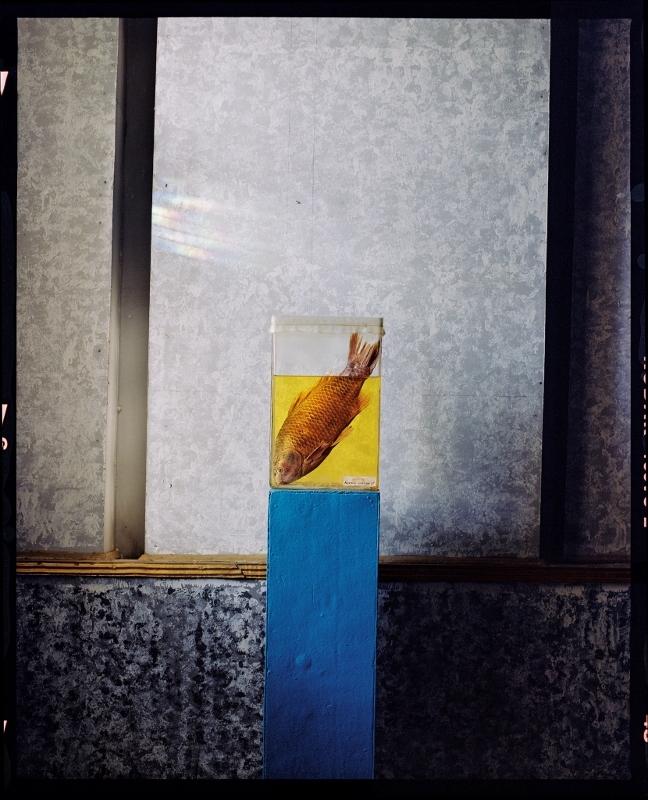影像藝廊:消失中的鹹海