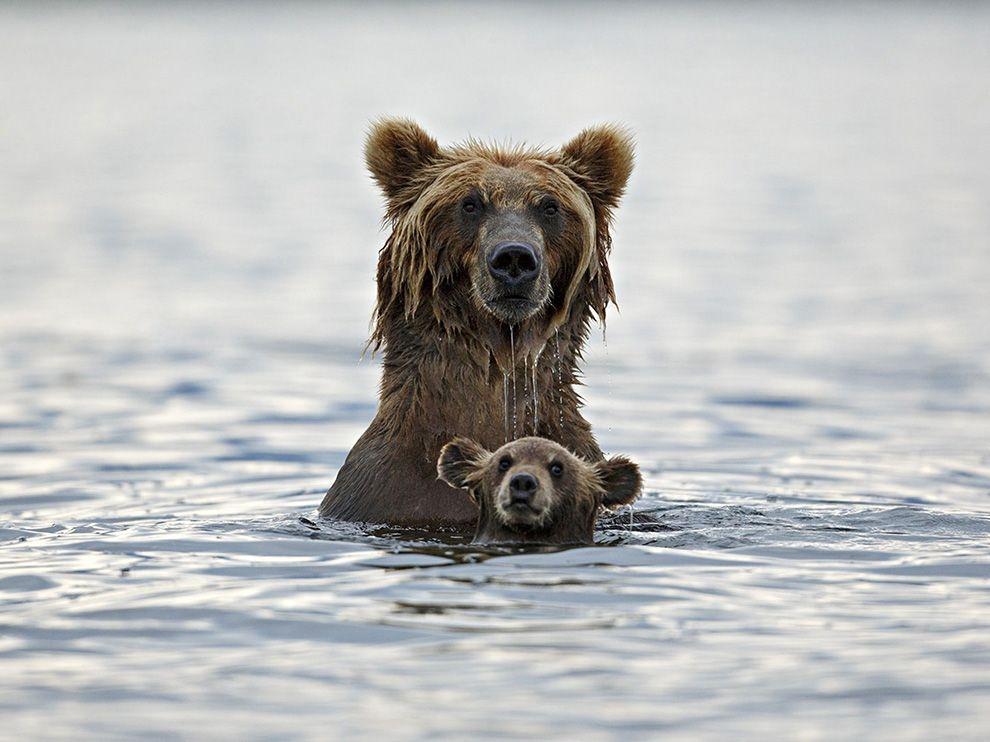 親子時刻:大熊與小熊