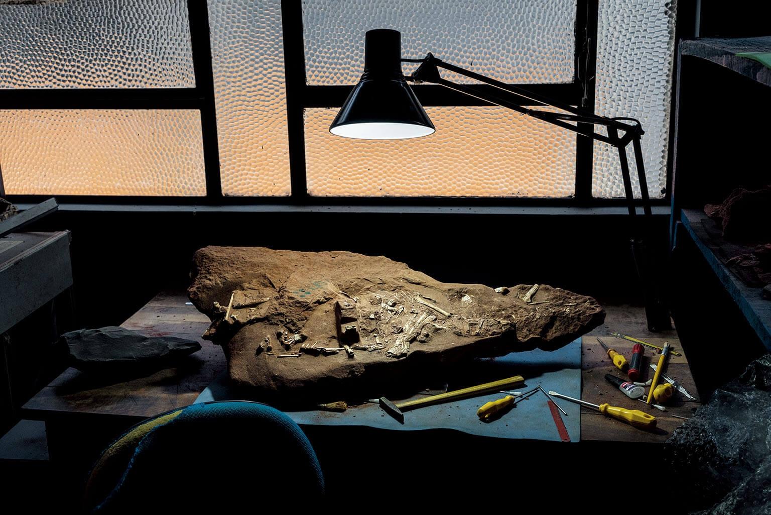 杜氏凱瓦神翼龍(Caiuajara dobruskii)的遺骨在巴西一間博物館等待研究。大量出土的化石發現,翻轉了科學家對翼龍的看法。一名專家說:「牠們不是我們原本以為的動物了。」 攝影:羅伯特.克拉克 Robert Clark