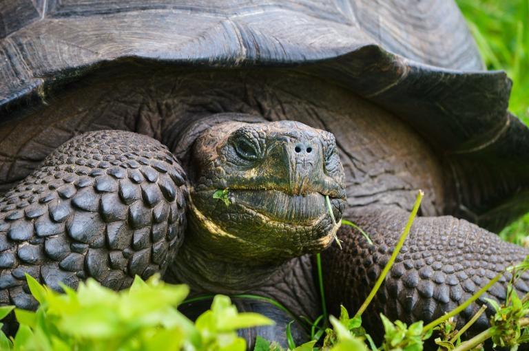加拉巴哥群島發現新種大型陸龜