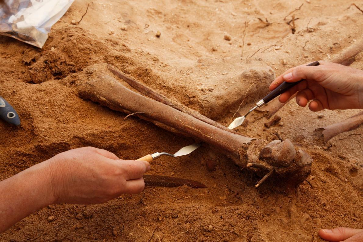 考古學家新發現惡名昭彰船難的集體墓穴
