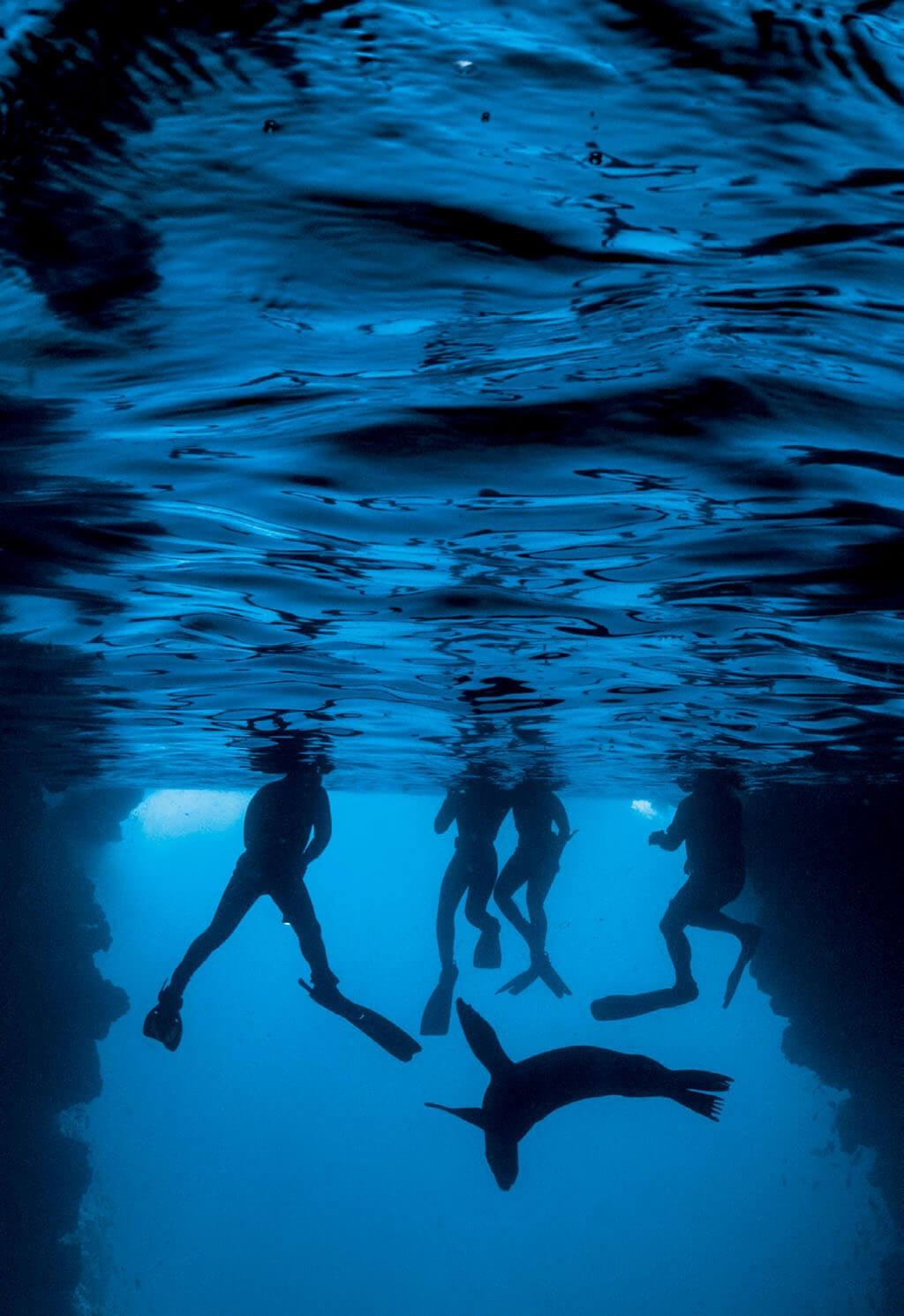 浮潛者在加拉巴哥海獅附近游泳。這樣的景點每年吸引約20萬名遊客,對於水與其他資源有大量需求。《國家地理》6月號將刊載克里斯多福. 所羅門針對加拉巴哥群島未來的深入報導。PHOTO: THOMAS P. PESCHAK