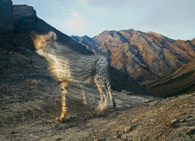 獵豹:邊緣上的跑者