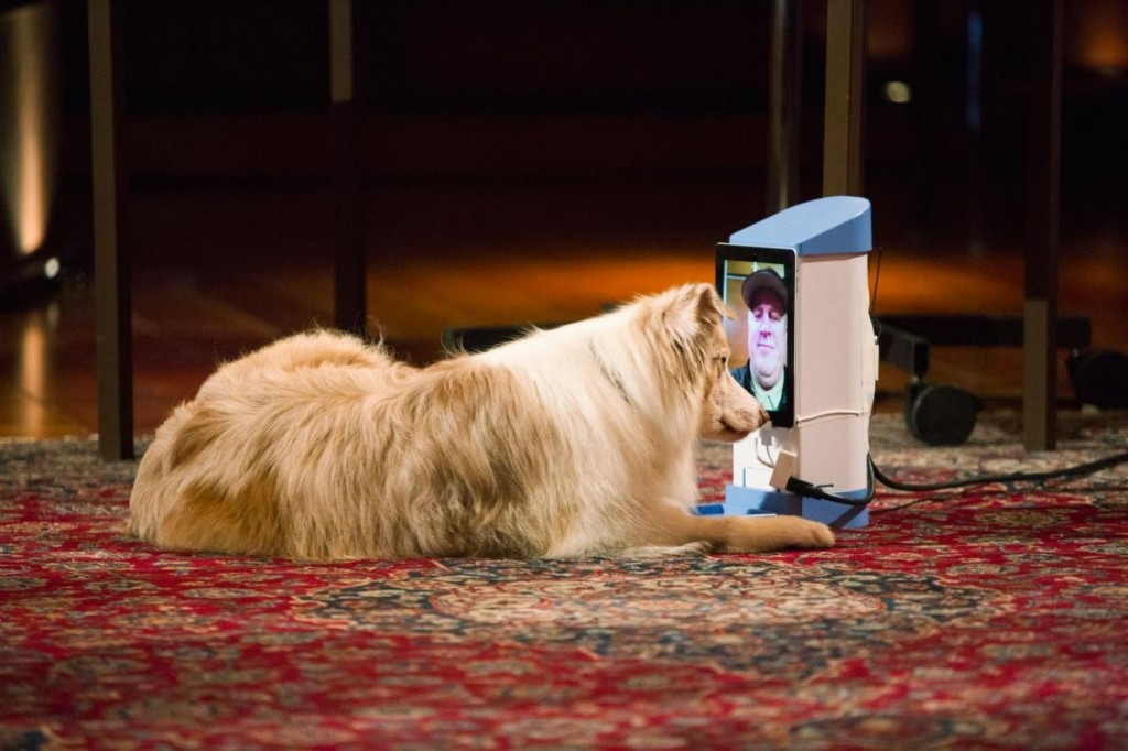為什麼狗狗無法在手機和平板上認出我們?