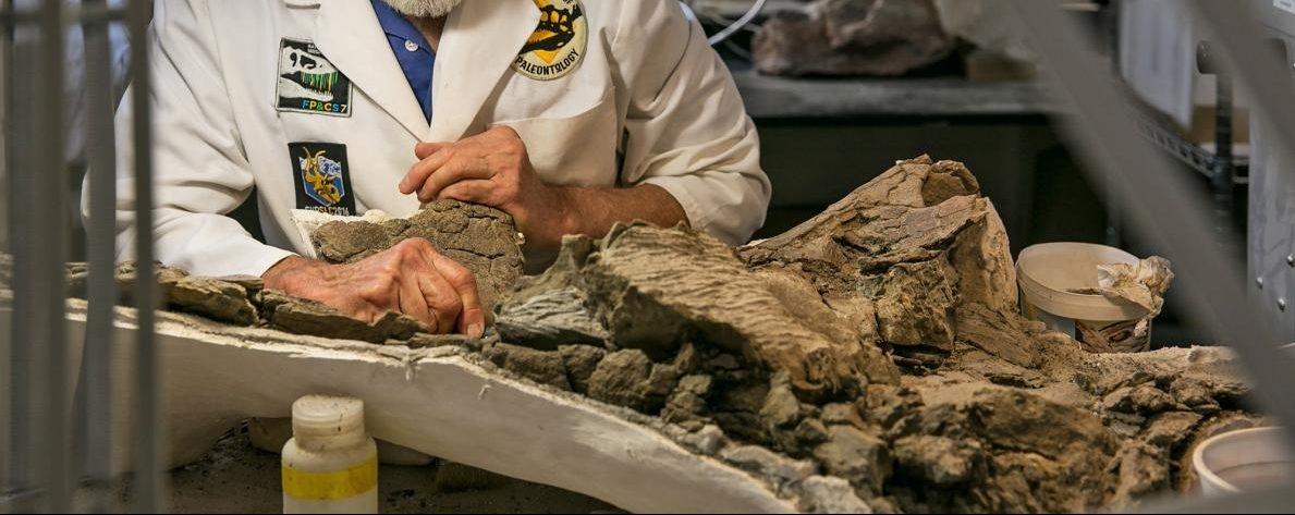 保護區出土了新恐龍!不過,川普總統可能更愛煤礦?