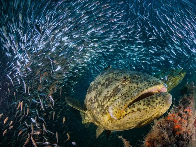 影像藝廊:大魚小傳