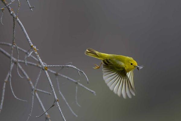 國家地理最受喜愛的鳥照片