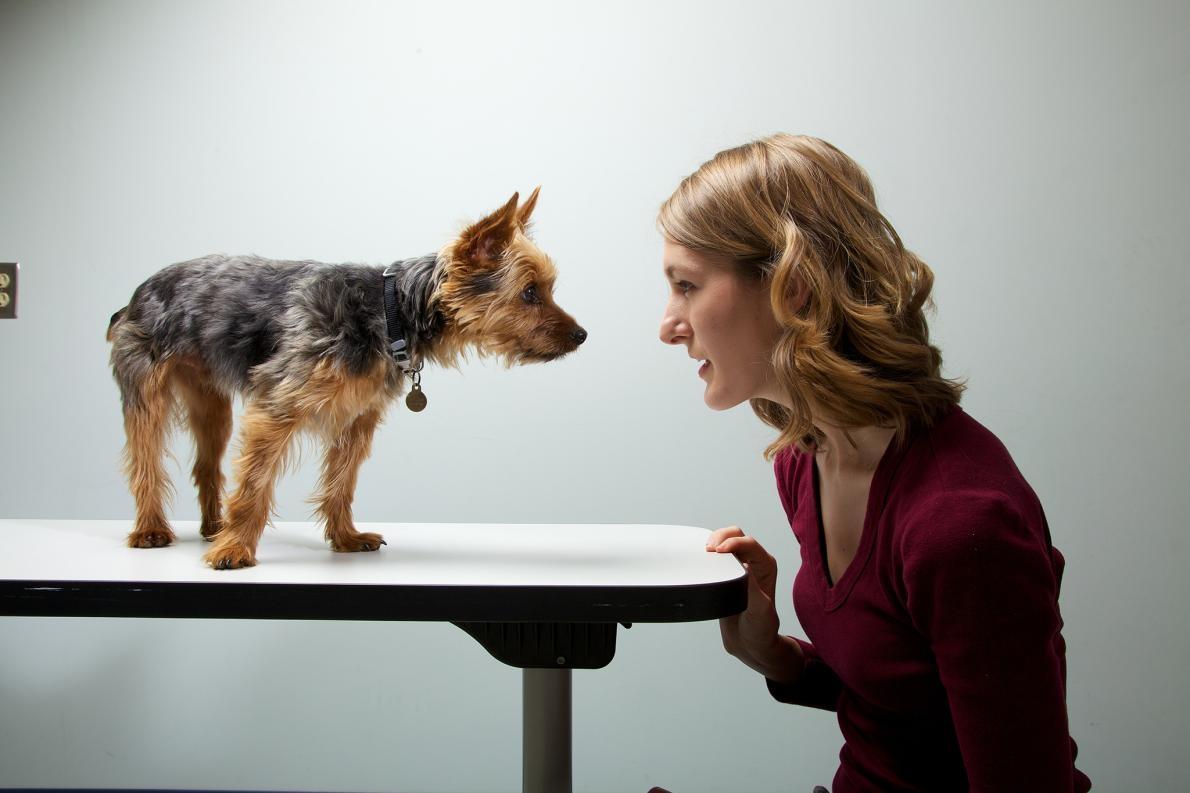 研究人員調查了1681 組狗與主人的性格。結論:狗狗與主人往往有相似的行為。 PHOTOGRAPH BY VINCENT J. MUSI, NAT GEO IMAGE COLLECTION