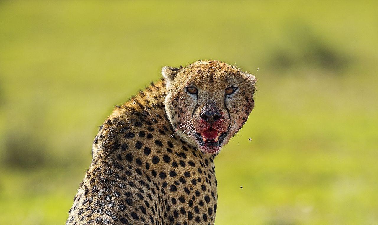 Photograph by Sashidhar Vempala, National Geographic Your Shot