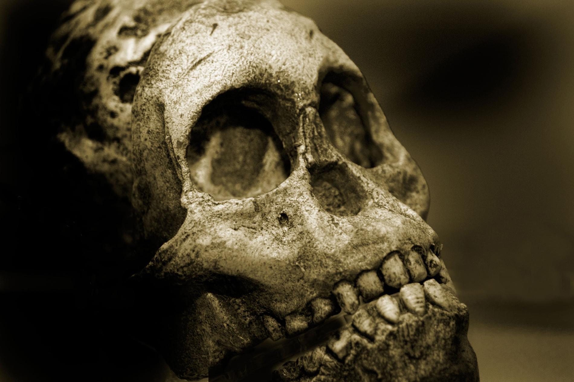 在各種人類物種歷史的大部分時間裡,咀嚼食物造成的牙齒磨損導致齒列與顎骨沿著齒緣對齊,例如照片中這顆尼安德塔(Neanderthal)男性的顱骨。PHOTOGRAPH BY LIGHTREIGN, ALAMY