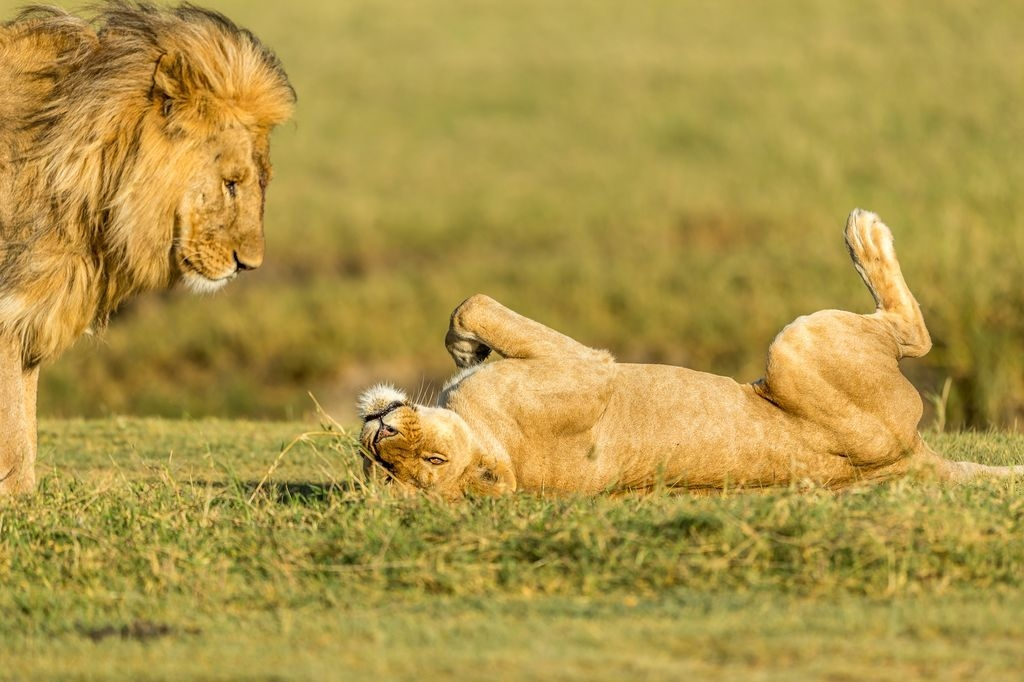 Photograph by Hymakar Valluri, National Geographic Your Shot