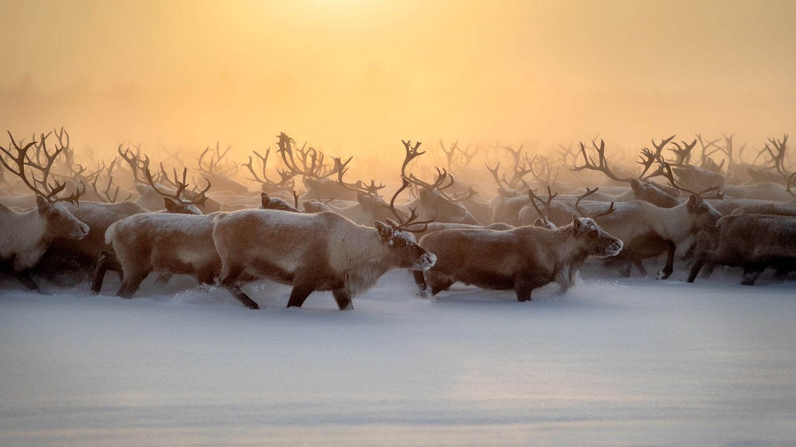 Photograph by Marcel Rebro, National Geographic Your Shot