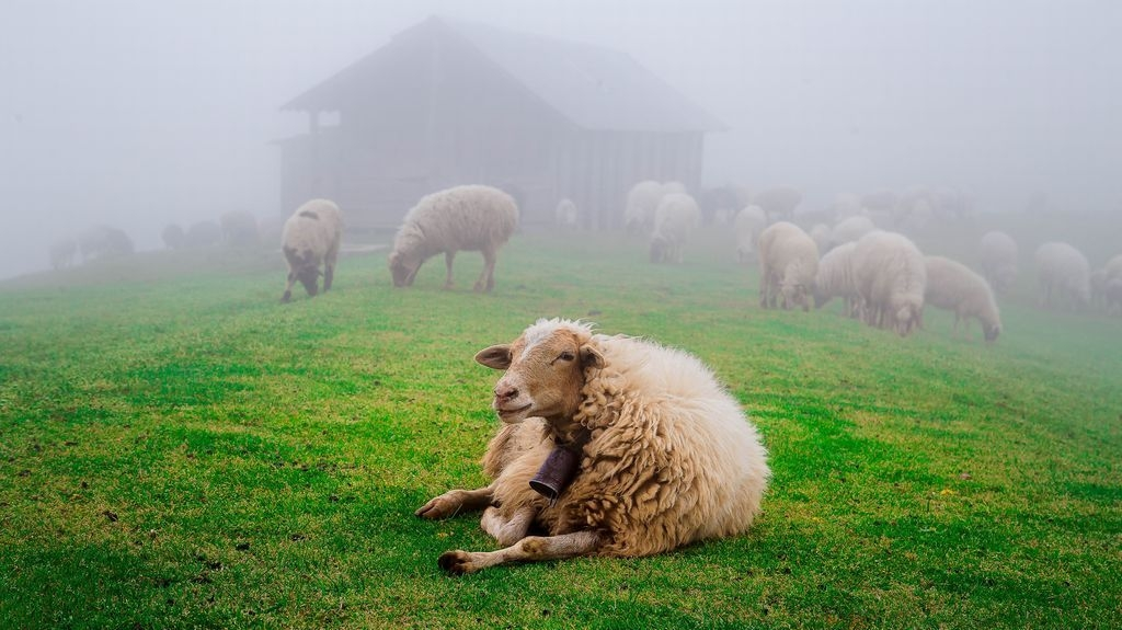 Photograph by Yousef Alizadeh, National Geographic Your Shot