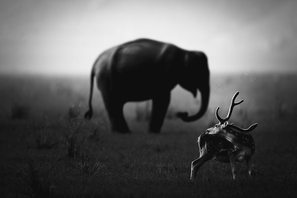 Photograph by Jignesh Minaxi, National Geographic Your Shot