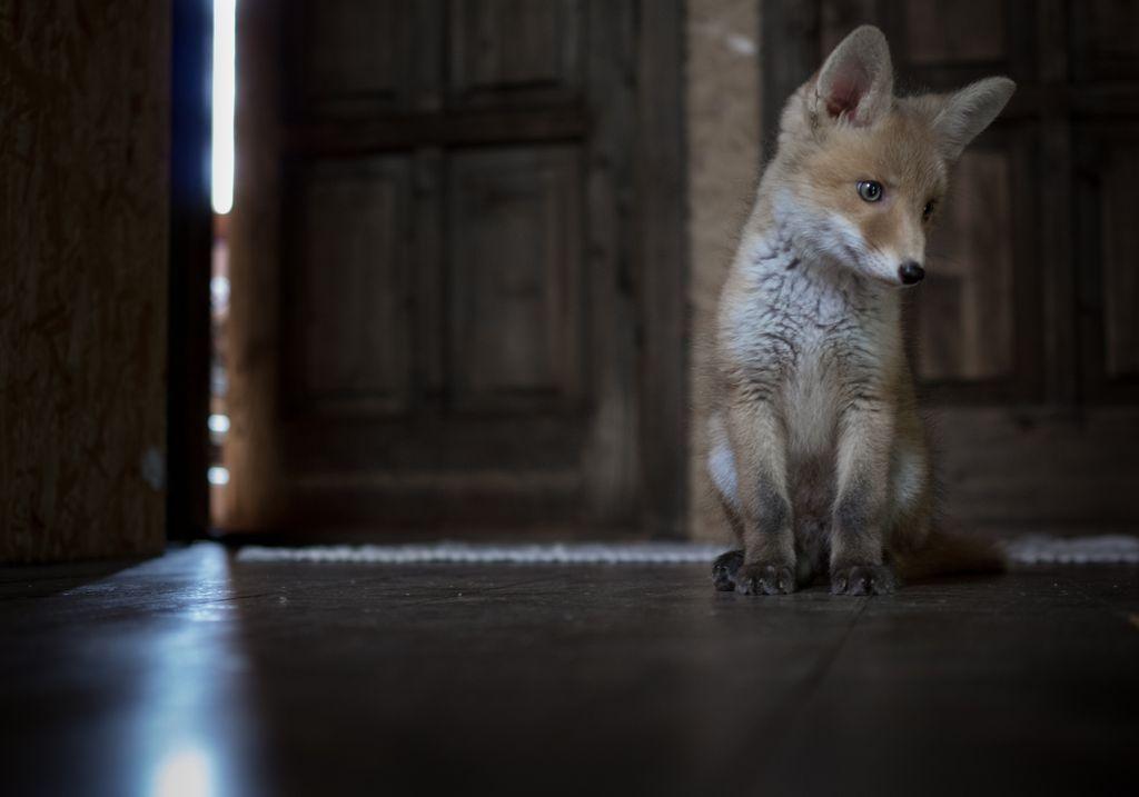 Photograph by Esteban Sanchez, National Geographic Your Shot