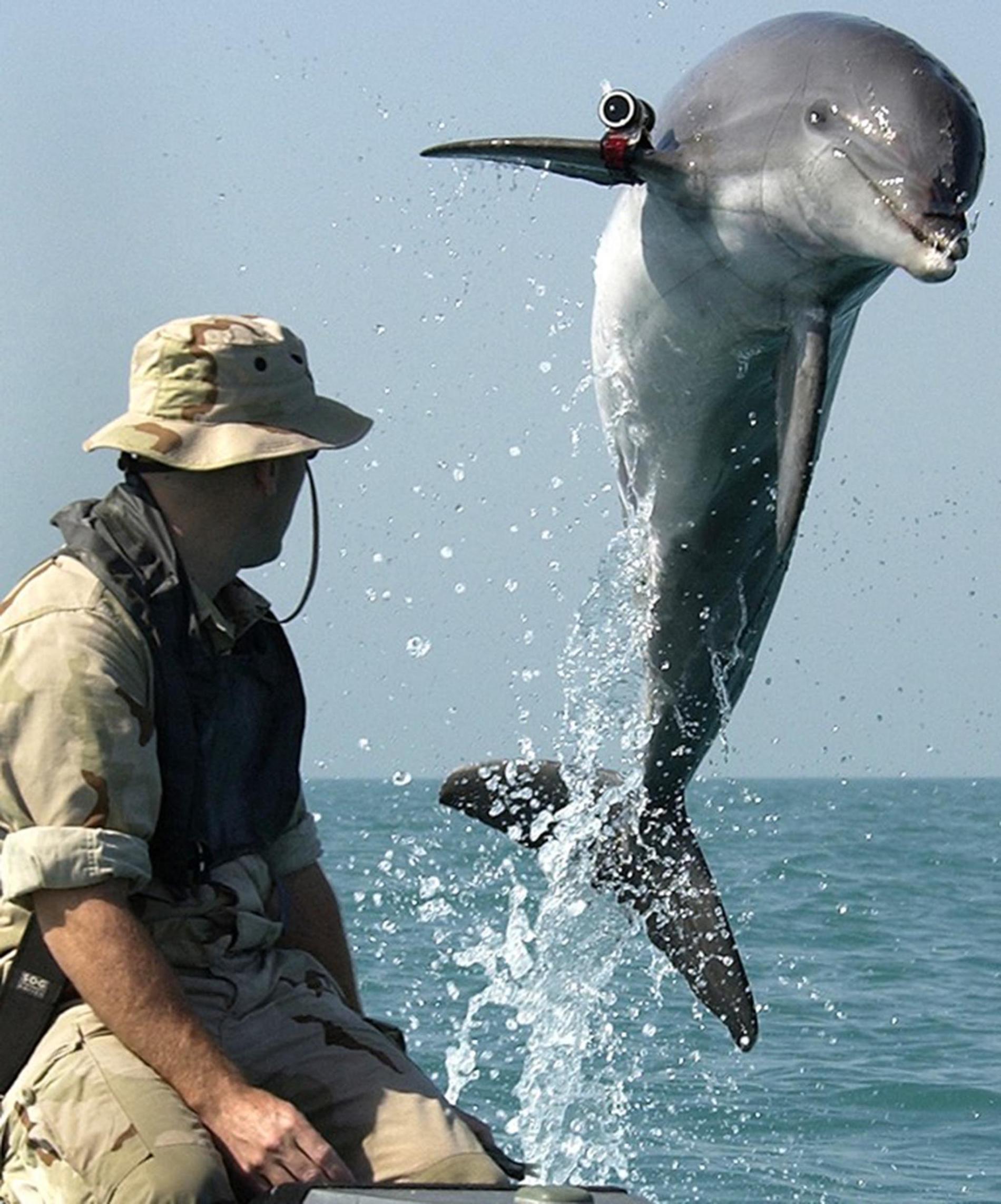 在美國海軍於波斯灣的一場訓練活動期間,一隻名叫「阿K」(K-Dog)的瓶鼻海豚跳出水面。PHOTOGRAPH BY PETTY OFFICER FIRST CLASS BRIAN AHO, U.S. NAVY