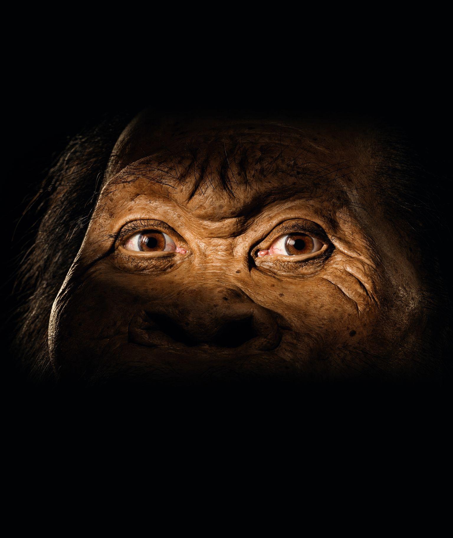 古生物藝術家約翰.古爾契以黏土塑型,再以矽樹脂鑄模而成的納萊蒂人(Homo naledi),是最新發現的人屬成員。MARK THIESSEN, NGM STAFF