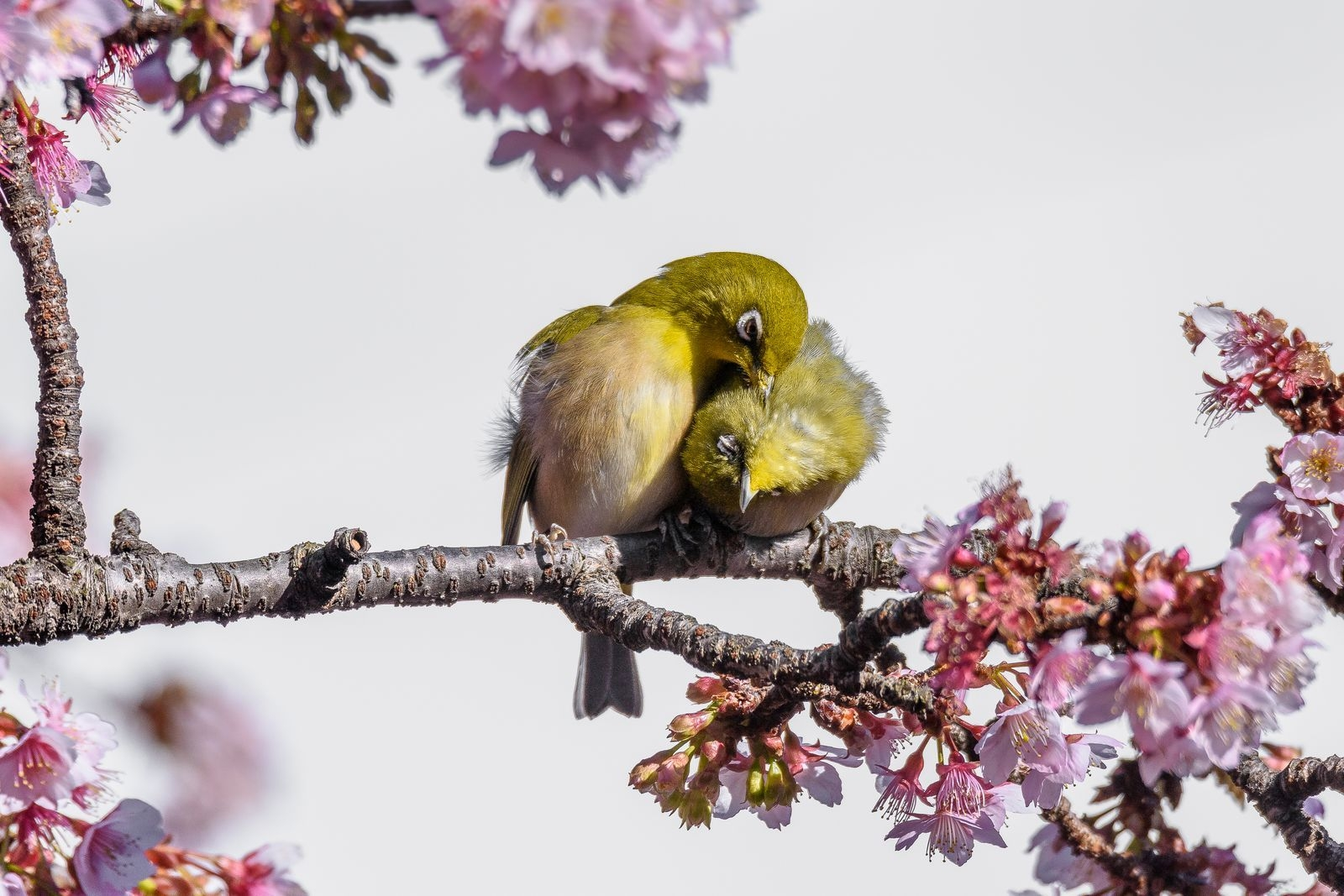 Photograph by Michel Godimus, National Geographic Your Shot
