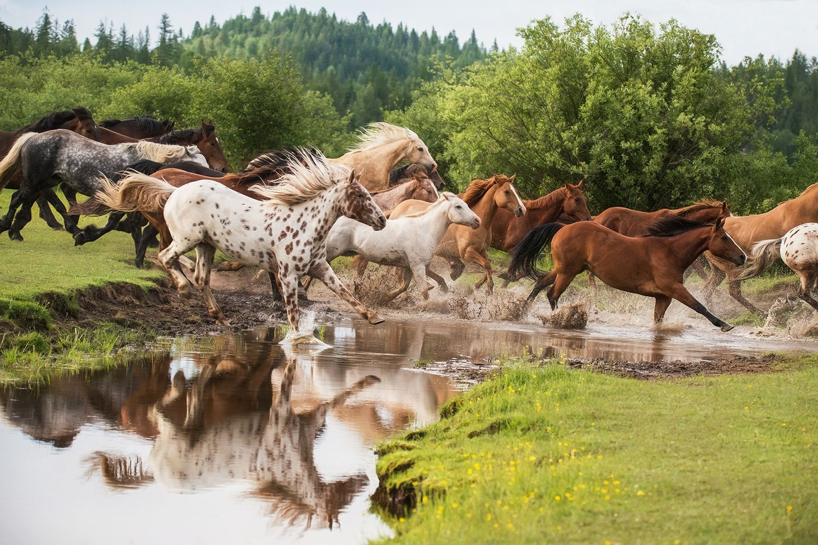 Photograph by Ginny Worthington, National Geographic Your Shot