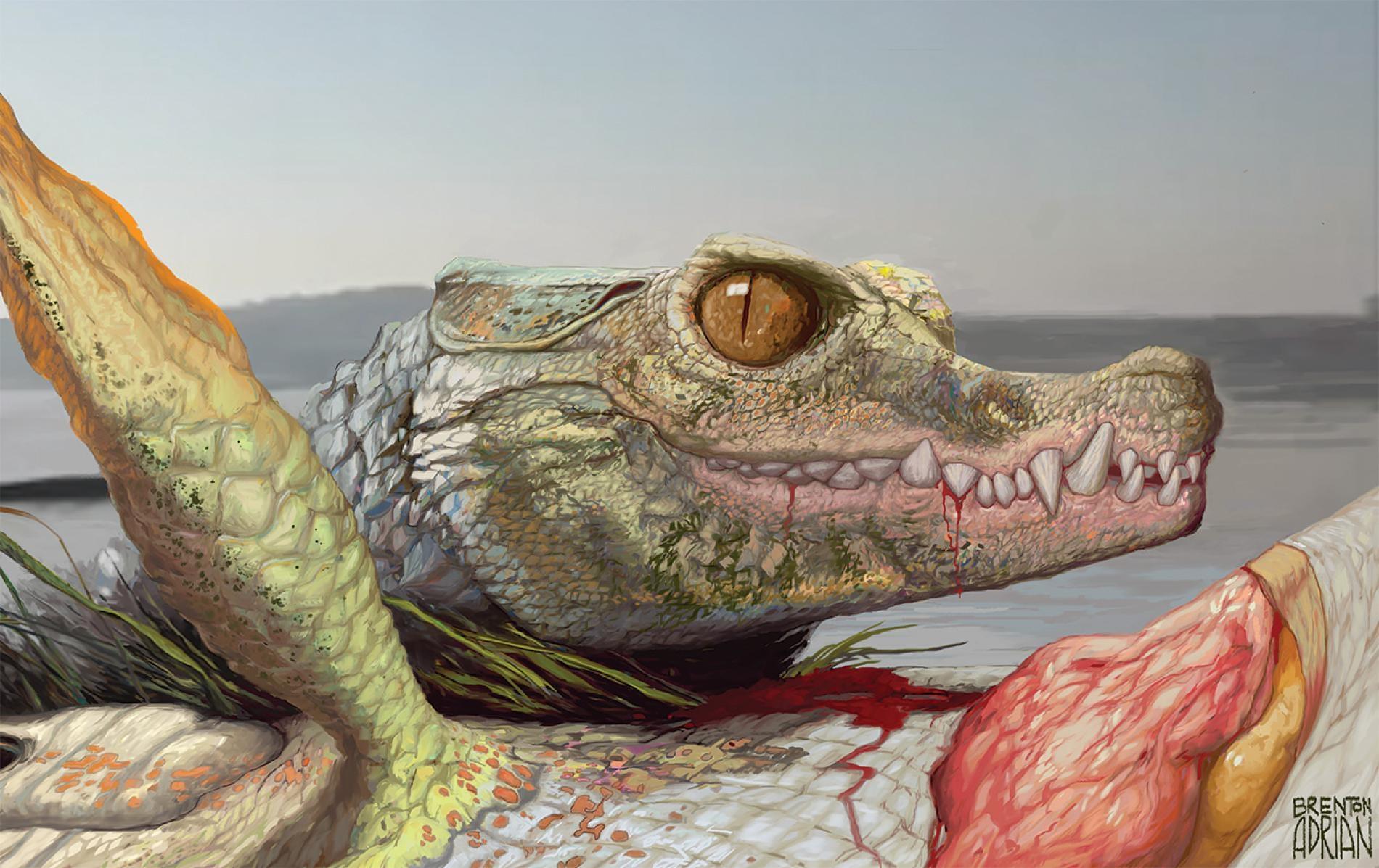9600萬年前,在現今美國德州阿靈頓市(Arlington)遼闊的河口三角洲內住了一種名叫Scolomastax sahlsteini的動物,牠是現代鱷魚的小型親戚。這幅重建圖畫出這種史前爬蟲類正在吃一隻肺魚的殘骸。ILLUSTRATION BY BRENTON ADRIAN
