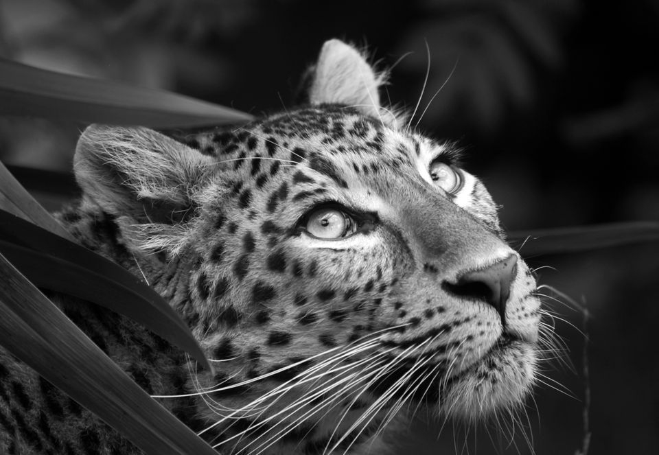 Photograph by Deborah Wakeford, National Geographic Your Shot