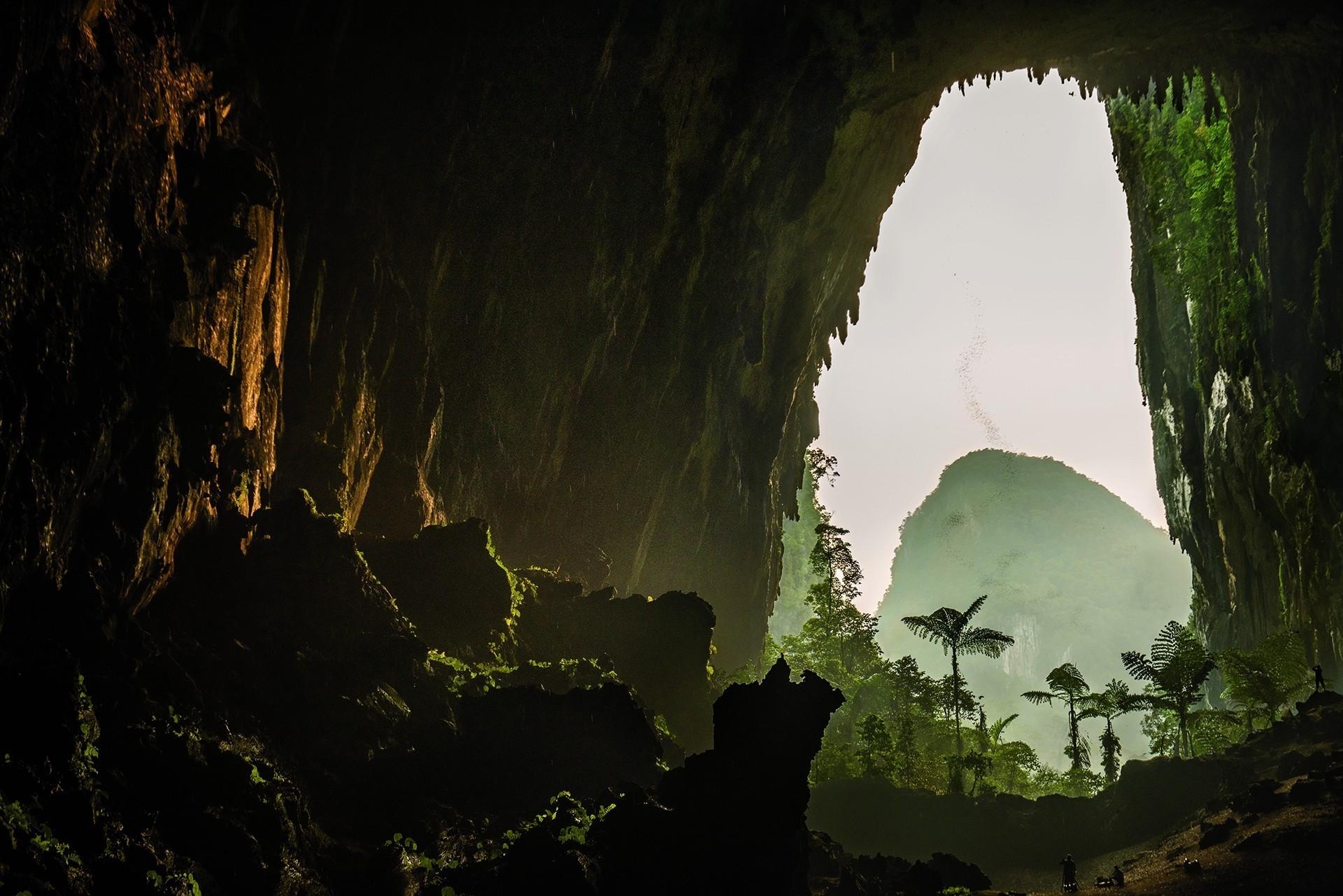 黃昏時分,成群蝙蝠散入鹿洞周圍的熱帶雨林中獵食。鹿洞是地球上最大的地底通道之一,洞內有超過200萬隻蝙蝠。攝影:卡斯坦.彼得 CARSTEN PETER