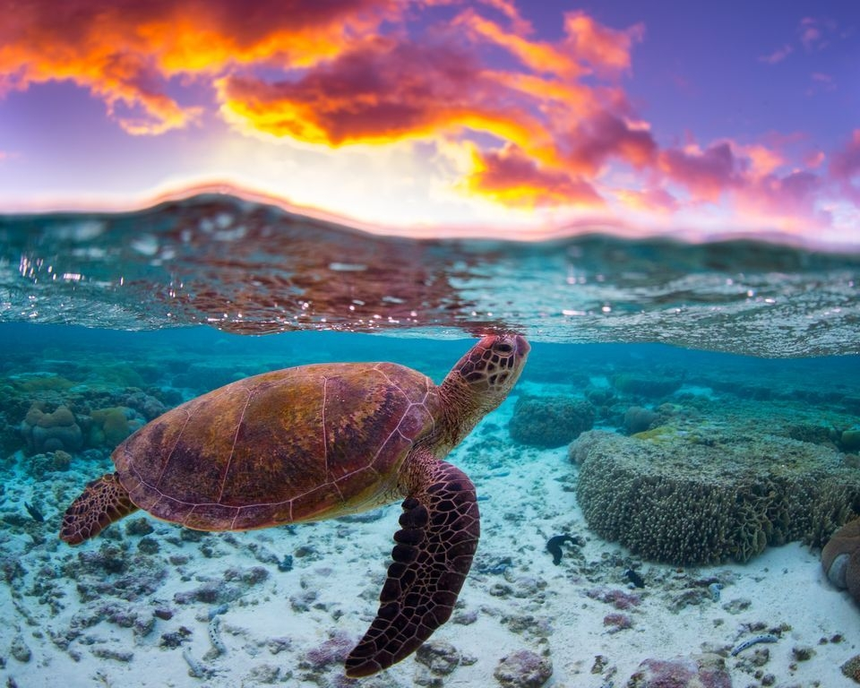 Photograph by mitchell pettigrew, National Geographic Your Shot