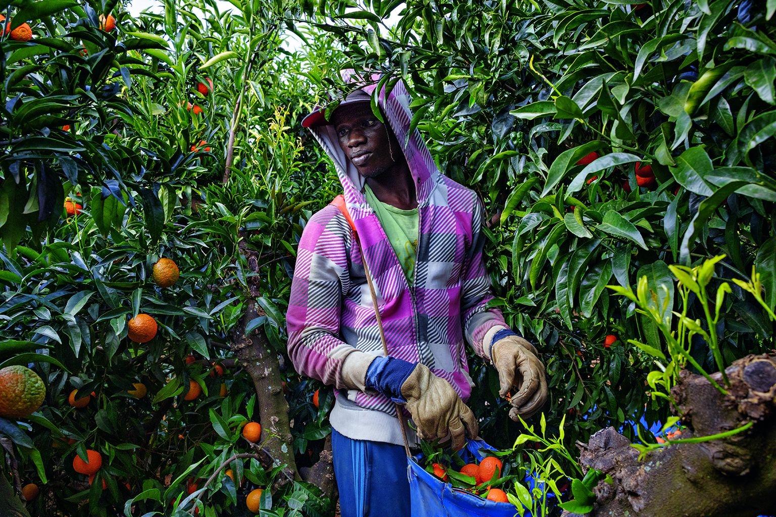 2016年從塞內加爾到達南西班牙的農業地區後,恩百耶.圖尼便在柑橘和其他果園從事定期的季節性工作。現年25歲的他已取得合法居留,並與其他塞內加爾人一起合租公寓。攝影:艾托.萊拉 AITOR LARA