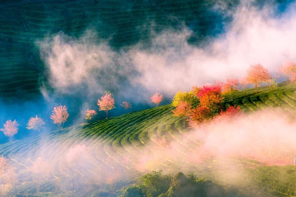 Photograph by Pham Chien, National Geographic Your Shot