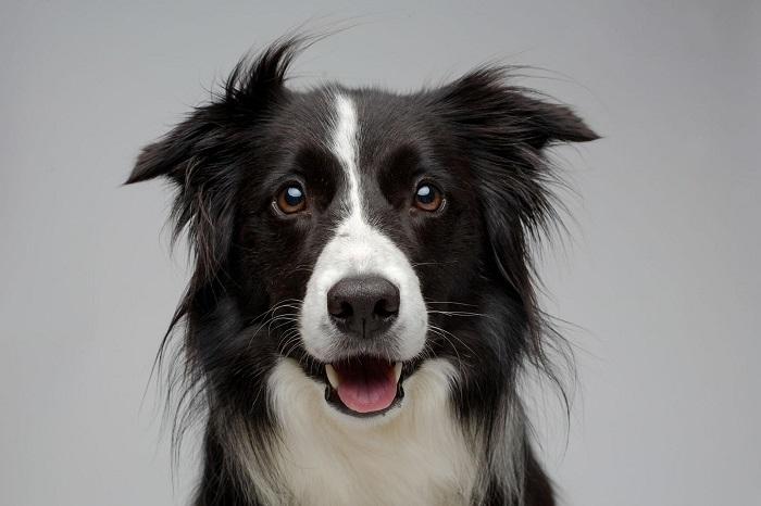 狗為什麼這麼友善?科學家終於有了答案!