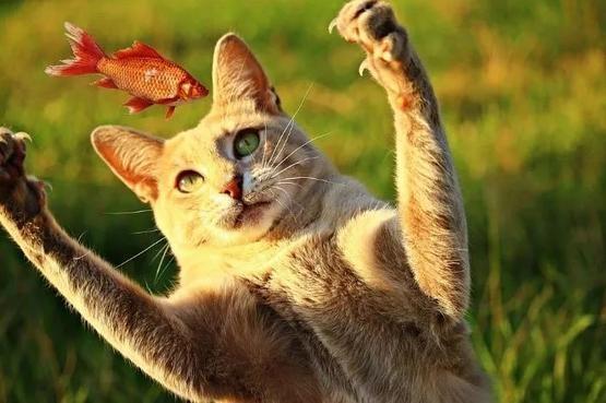 貓類捕食行為對不同大小環境的影響不盡相同| 圖片來源:pixabay