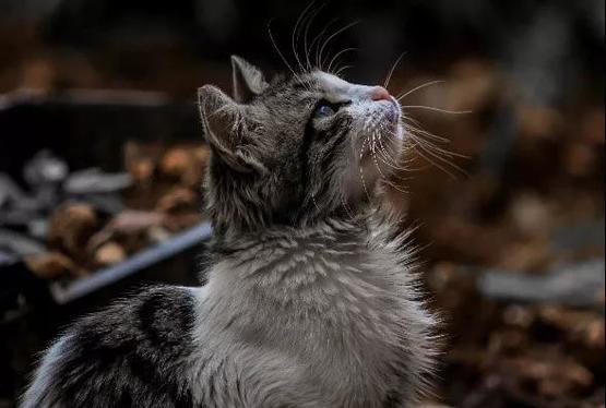 不惜一切手段消除野貓的撲殺計畫也並非完全有效| 圖片來源:pexels