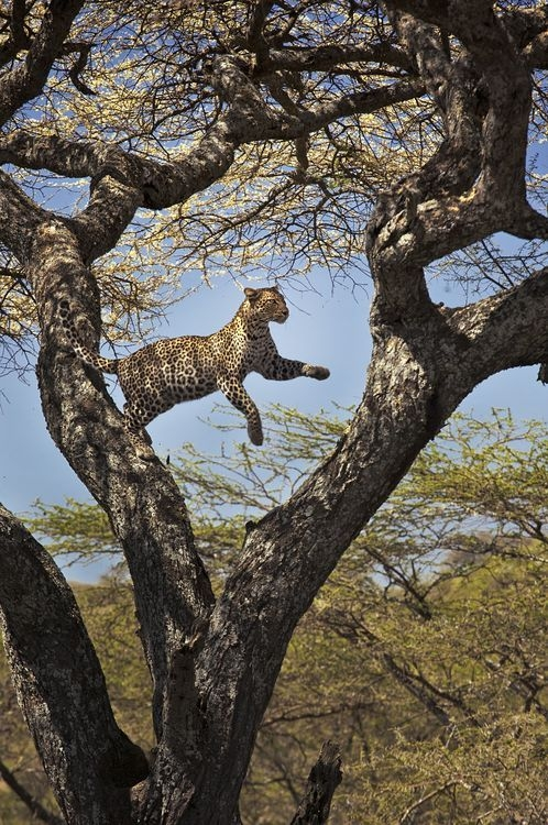 Photograph by Theodore Mattas, National Geographic Your Shot