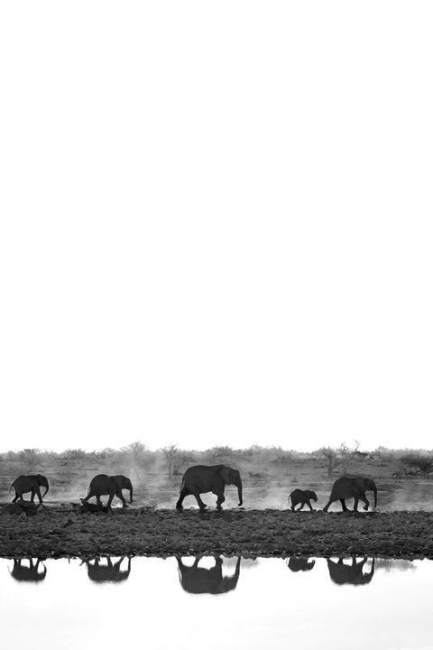 Photograph by Jaco Beukman , National Geographic Your Shot