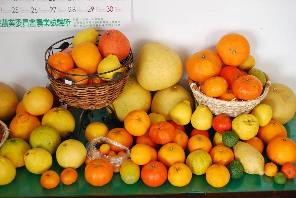 多樣的柑橘品種。圖片來源:農試所