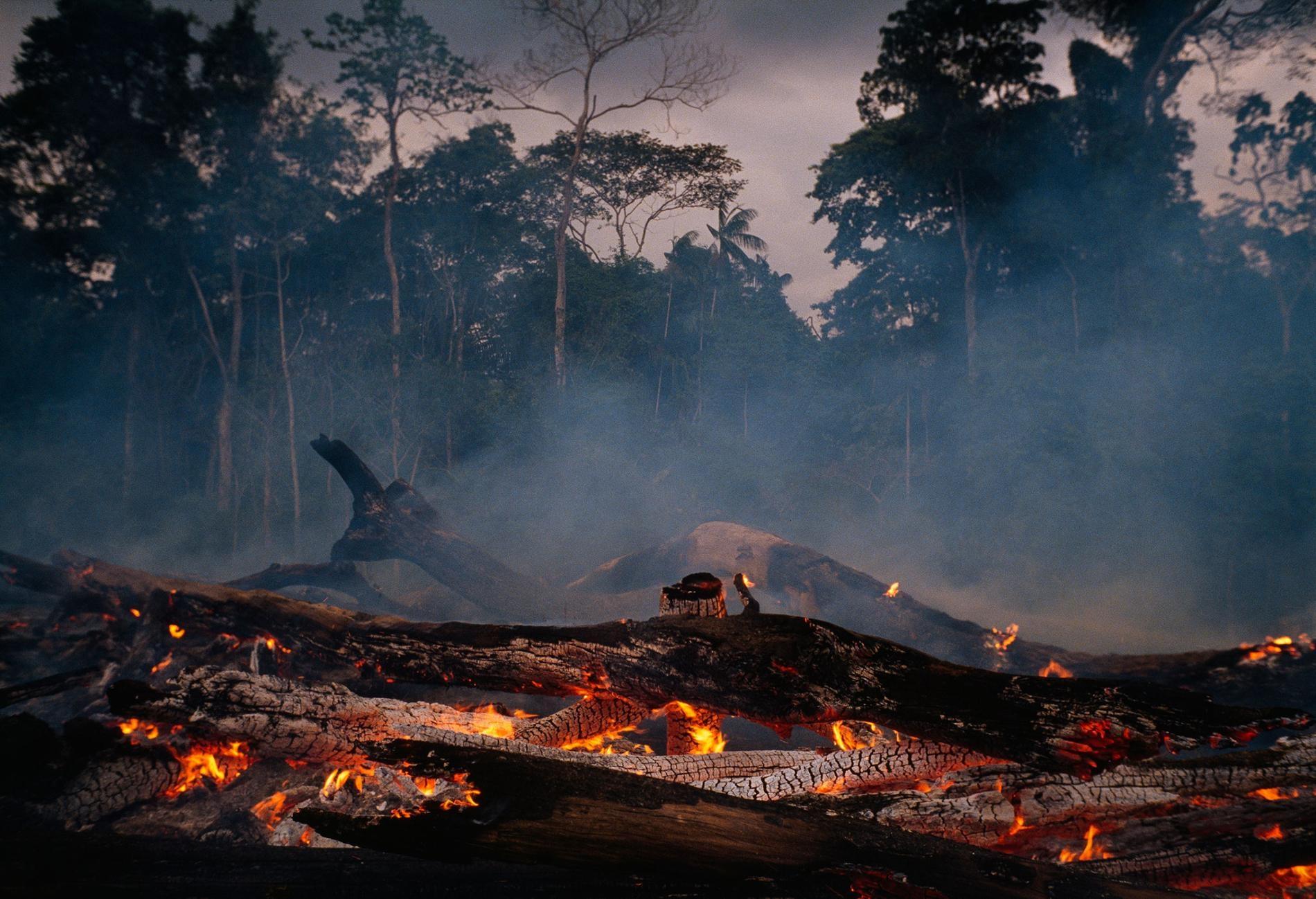 在巴西的亞馬遜地區,雨林被清除的速率在最近幾年上升了,而且在新總統賈伊‧波索納洛的治理下,這個速率還可望再進一步提升。這個森林常常會被焚燒來進行清理,得到的土地隨後被用來做為牛隻的牧草場或是農田。PHOTOGRAPH BY MICHAEL NICHOLS, NAT GEO IMAGE COLLECTION