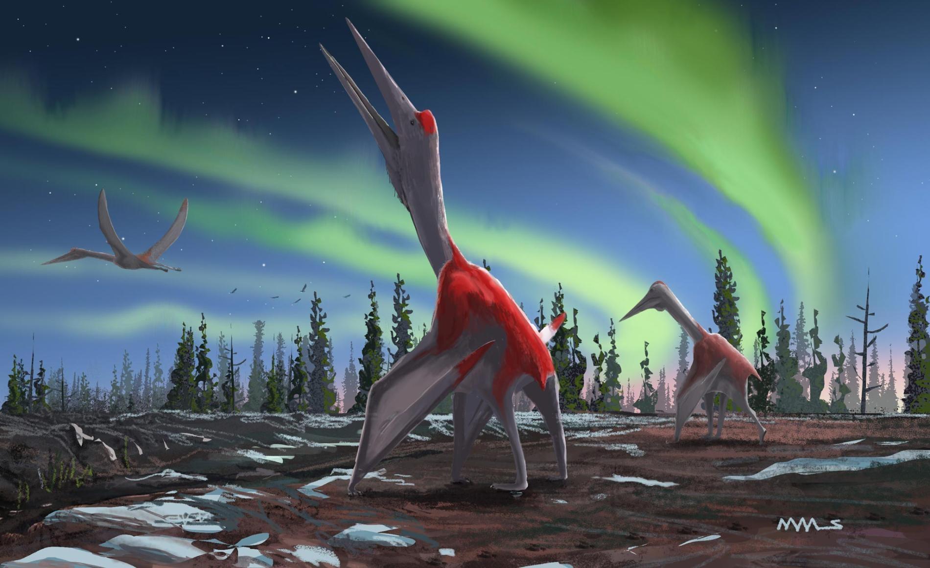 《古脊椎生物學刊》(<i>Journal of Vertebrate Paleontology</i>)。刊載的一篇新研究描述了一類叫做 <i>Cryodrakon boreas</i>,意即「北風冰龍」的新種翼龍。這種飛行爬行動物的翼展至少有4.9公尺,甚至10公尺寬。牠的親戚諾氏風神翼龍(<i>Quetzalcoatlus northropi</i>)即可長到這個尺寸。 ILLUSTRATION BY DAVID MAAS