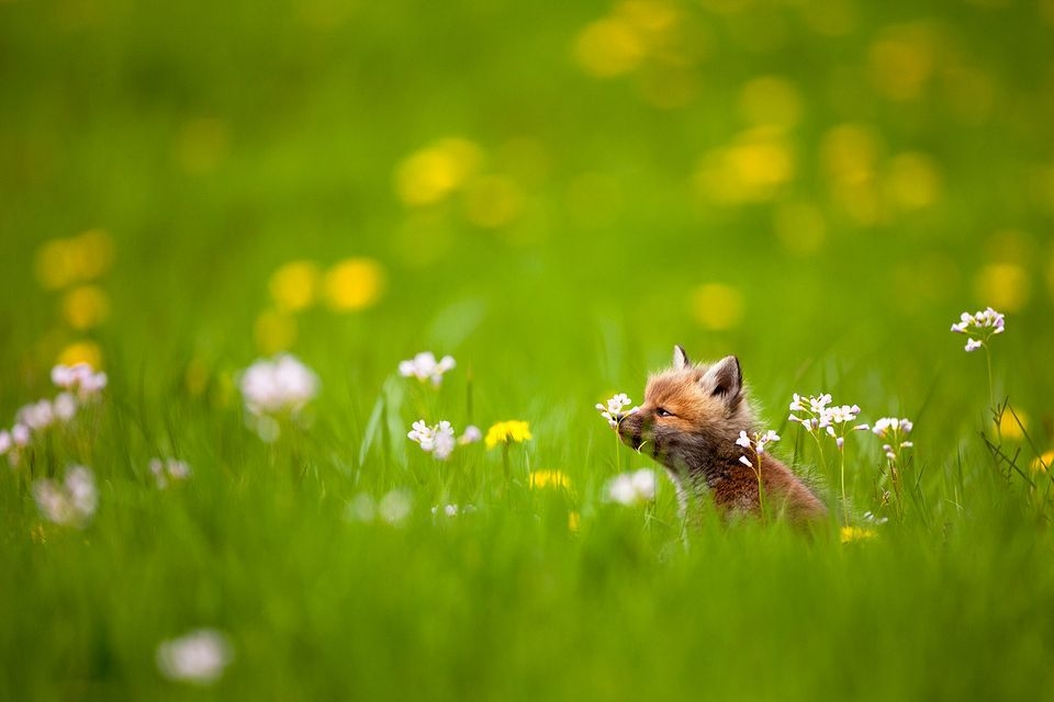 Photograph by Guillaume FRANCOIS, National Geographic Your Shot