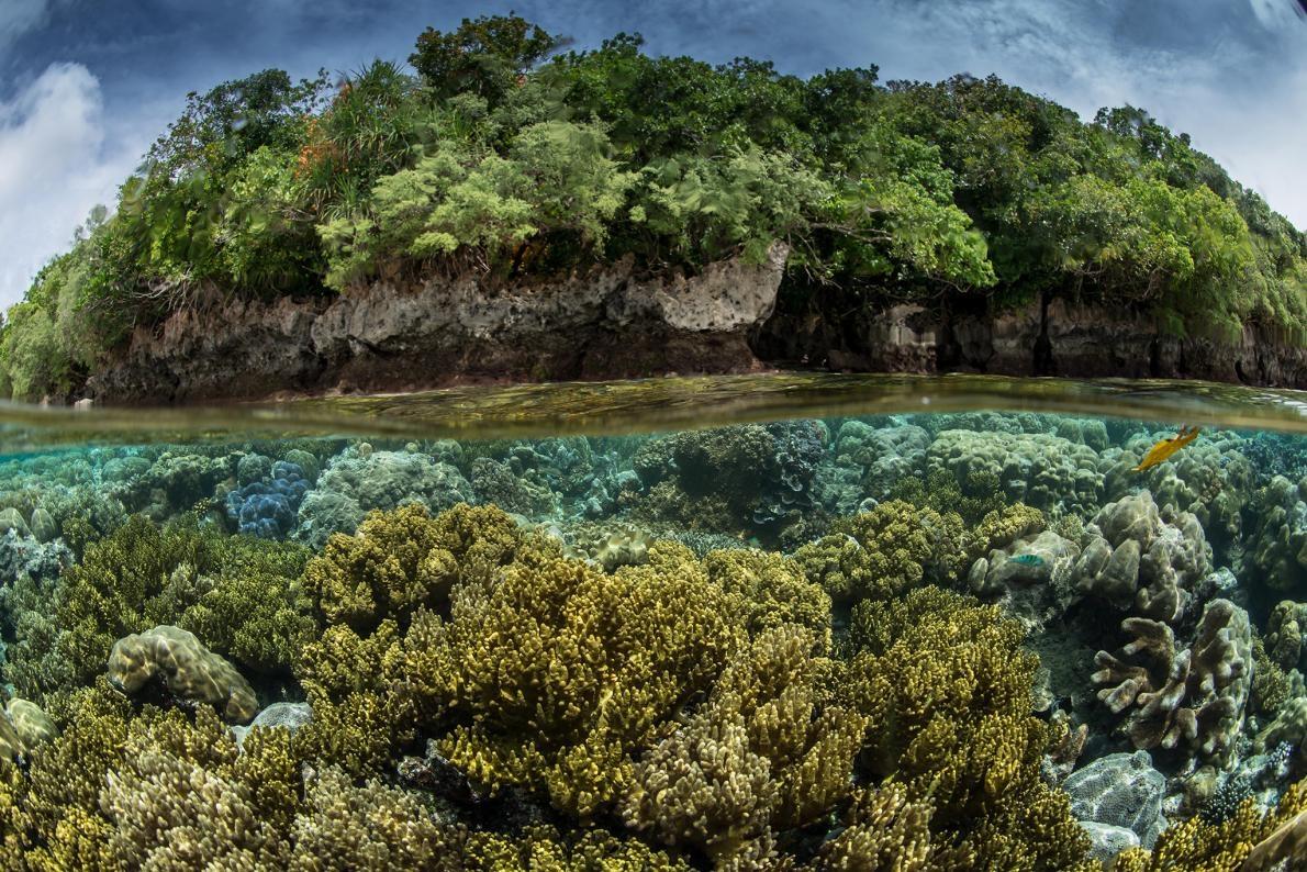 在「原始海洋」(Pristine Seas)這個計畫中一趟到帛琉的探險裡,工作團隊發現了這邊的陸上和海裡都擁有高度生物多樣性。PHOTOGRAPH BY ENRIC SALA, NAT GEO IMAGE COLLECTION