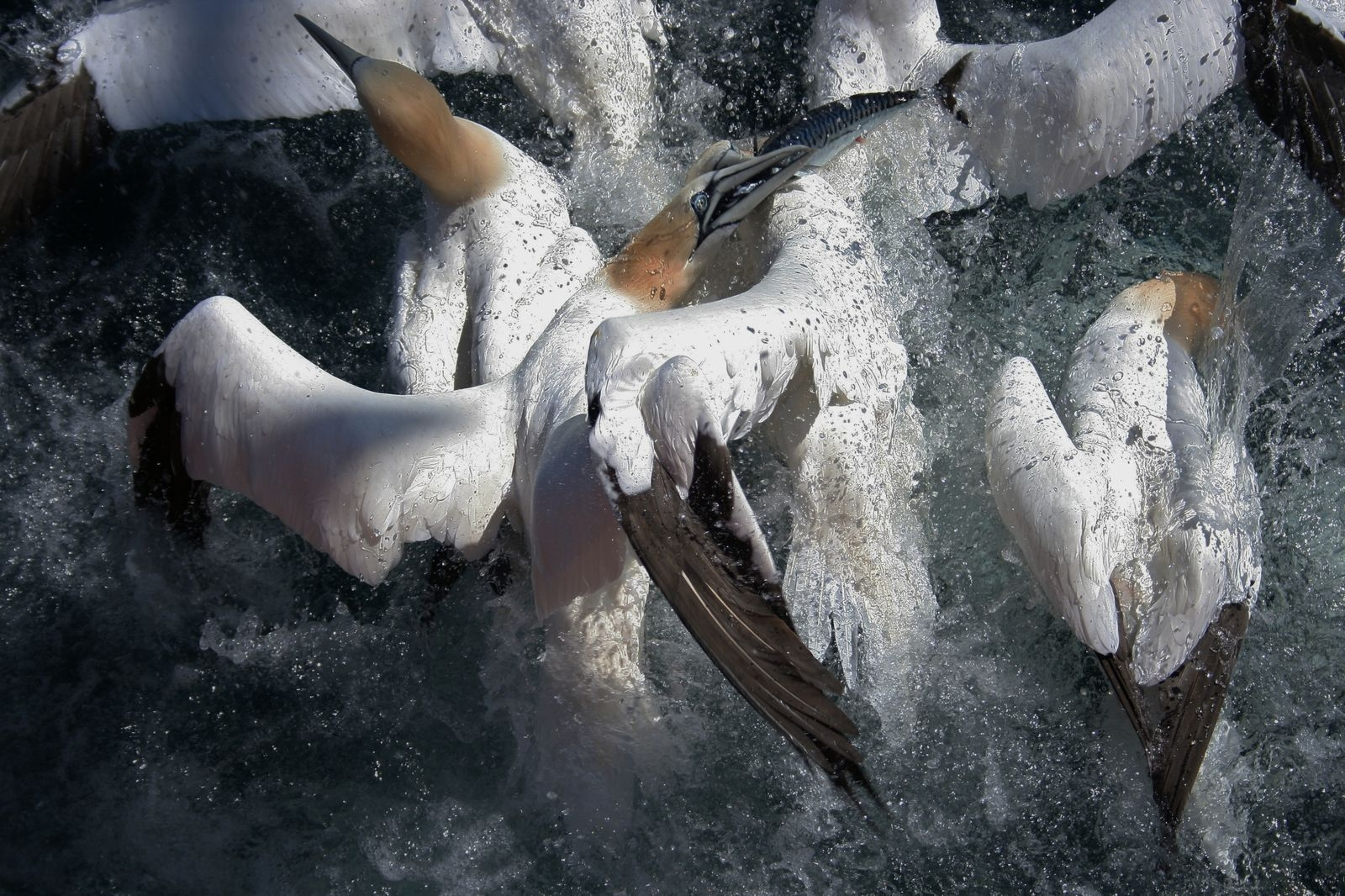 Photograph by Joel Woods, National Geographic Your Shot