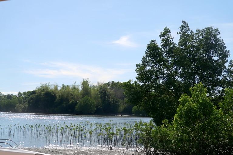島上的紅樹林復育工作。Arnel Murga/Mongabay提供。