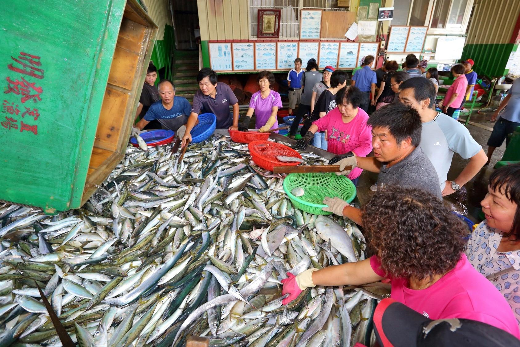 從友善漁法開始 展望海洋教育 (Sponsored)