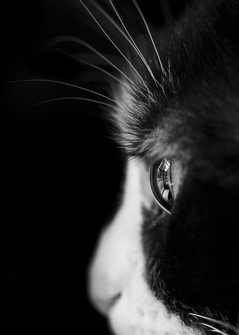Photograph by yvette h., National Geographic Your Shot