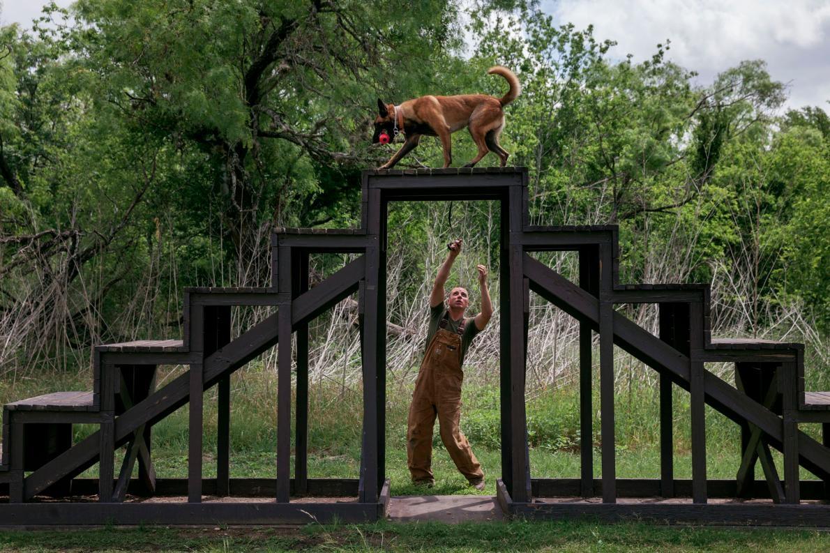 <b>障礙賽道</b> – 訓練師利用障礙賽道模擬真實世界中的各種地形,以磨練狗兒服從的能力。這隻狗名叫杜旺達拉(Douangdara),是以2011年在阿富汗直升機墜毀事件中喪生的海軍軍官約翰.杜旺達拉(John Douangdara)命名。PHOTOGRAPH BY ADAM FERGUSON, NATIONAL GEOGRAPHIC