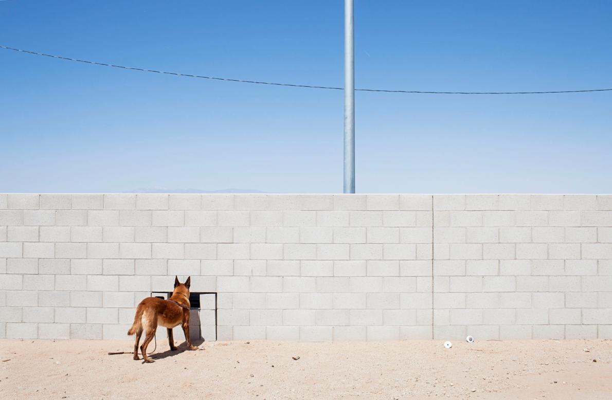 <b>躲貓貓</b> – 一隻三歲大的狗在受訓時練習搜尋毒品。PHOTOGRAPH BY ADAM FERGUSON, NATIONAL GEOGRAPHIC