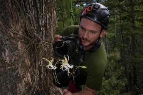生物學家彼得.胡利漢正在觀察「超級鬼蘭」,位置在一棵落羽松上15公尺的高處。PHOTOGRAPH BY MAC STONE