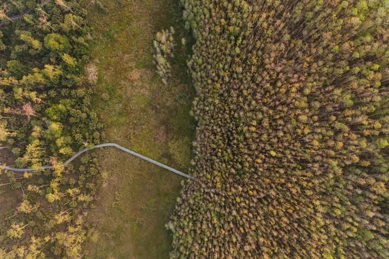 一條木棧道蜿蜒通過螺旋沼澤保護區及其濕草地、沼澤,還有全世界最大的原始柏樹林。PHOTOGRAPH BY MAC STONE