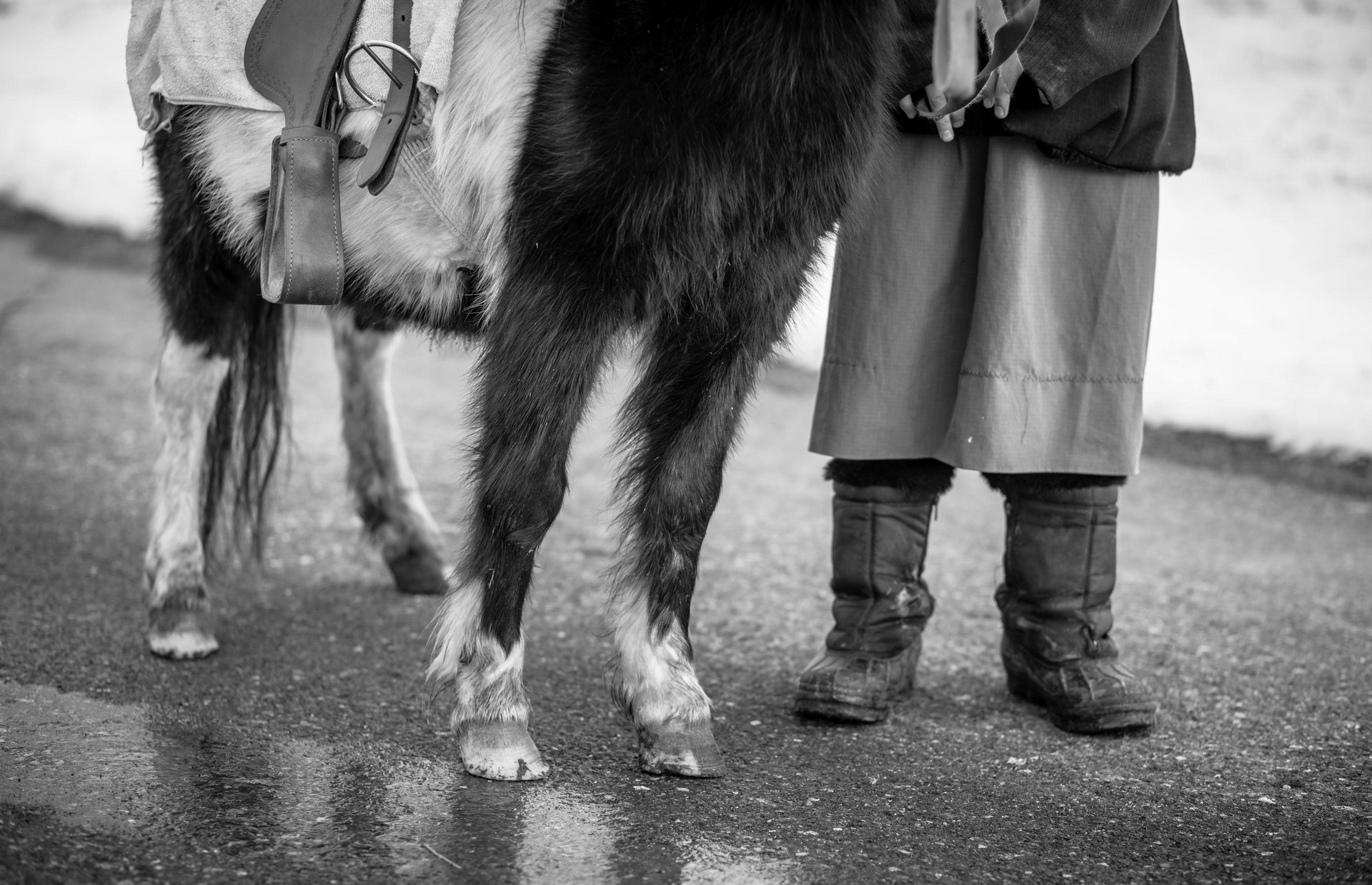 Photograph by Jennifer MacNeill, National Geographic Your Shot