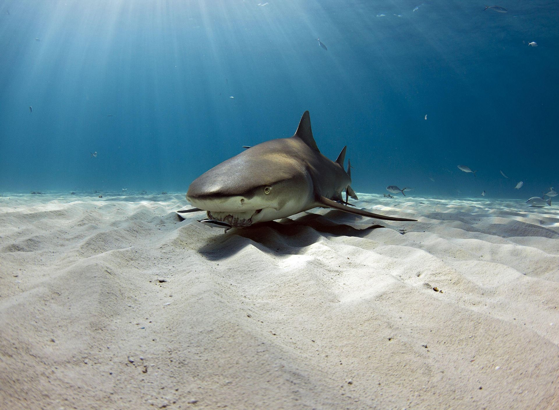 Photograph by Raul Boesel, National Geographic Your Shot
