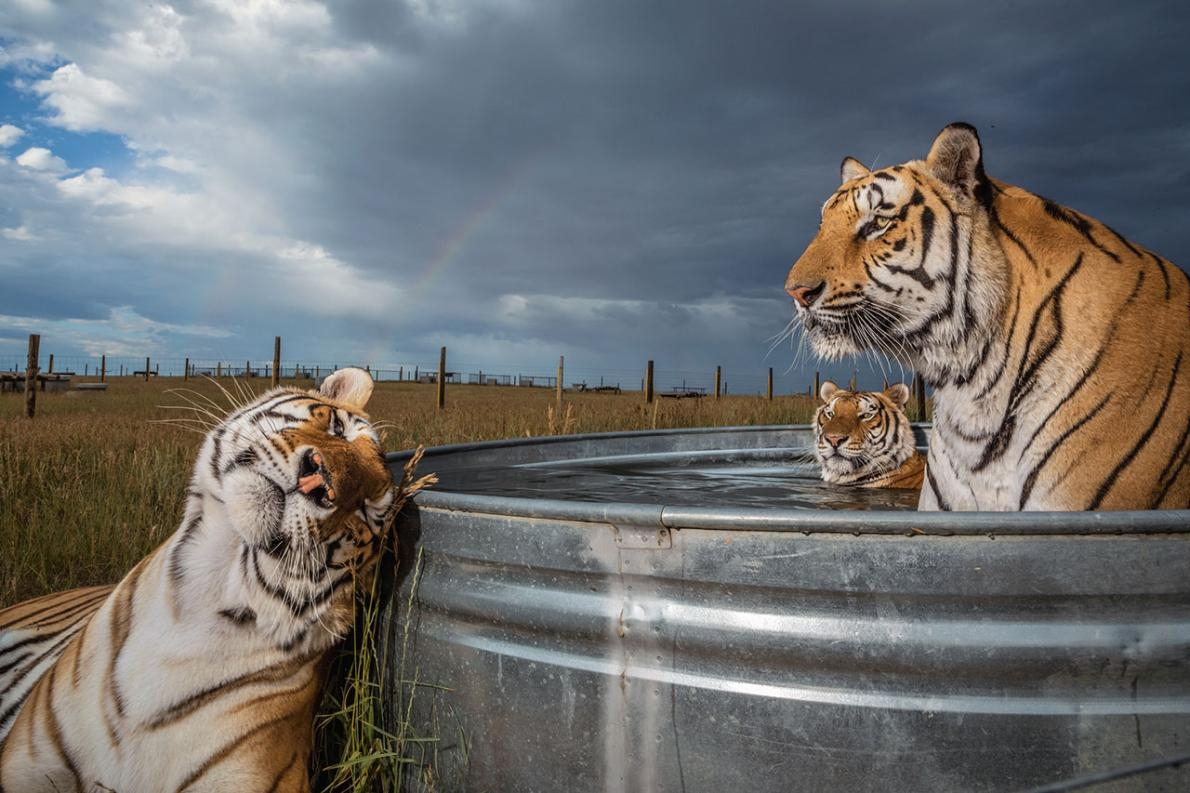 Photograph by Steve Winter, National Geographic